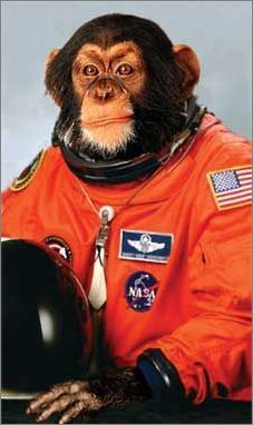 chimpanze astronaut - photo #11
