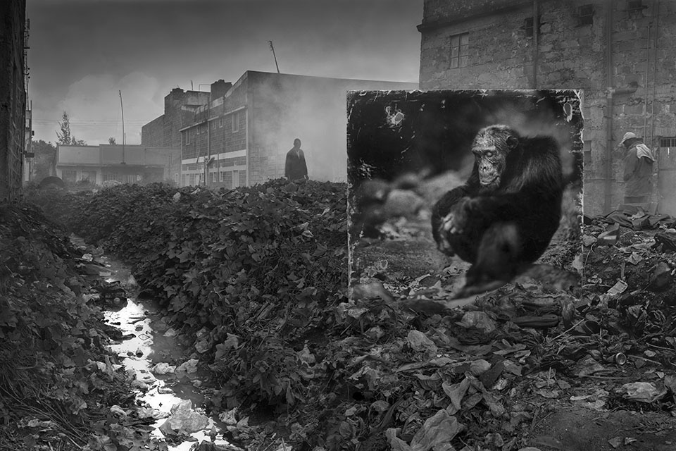 04_ALLEYWAY-WITH-CHIMPANZEE-3200px